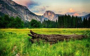 Обои горы, трава, деревья, Калифорния, поляна, Национальный парк, зелень, Йосемити, коряга, скалы, Yosemite National Park, лес, ...