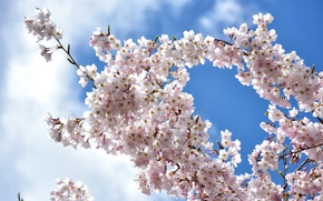 Картинка небо, облака, ветки, вишня, весна, сакура, цветение