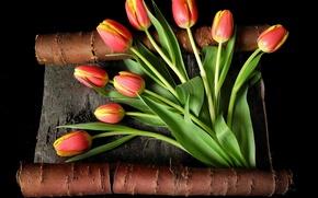 Картинка листья, цветы, стебли, желтые, тюльпаны, красные, кора, черный фон, бутоны
