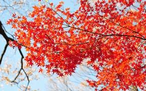 Картинка осень, небо, листья, ветки