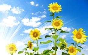 Картинка небо, облака, подсолнухи, голубое, желтые, лучи солнца