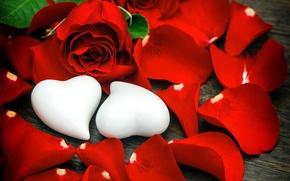 Картинка розы, лепестки, сердечки, бутоны, День Святого Валентина