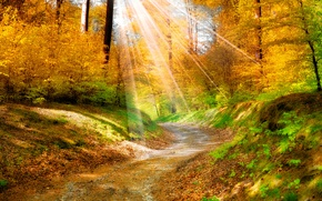 Картинка листья, деревья, пейзаж, природа, дорожка, солнечные лучи, золотая осень, желтые. лес