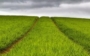 Обои поле, небо, природа