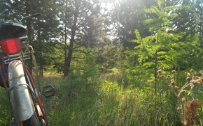 Картинка лес, лето, Велосипед