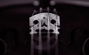 Картинка макро, скрипка, струны