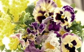 Анютины глазки  только лучшие фото цветов