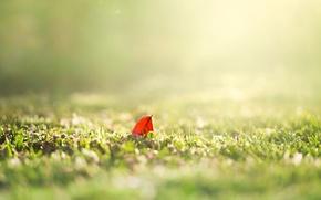 Картинка зелень, лето, трава, солнце, макро, природа, фон, обои, размытие, весна, утро, день, листик, wallpaper, листочек, ...