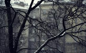 Картинка снег, ветки, серость, дома, Дерево