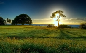 Картинка море, солнце, дерево, горизонт, полянка