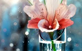 Обои цветок, вода, рюмка