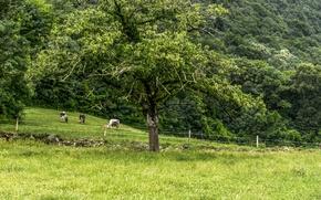 Картинка зелень, поле, трава, green, Лето, summer, grass, field