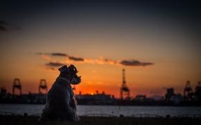 Картинка закат, Собака, горизонт, терьер