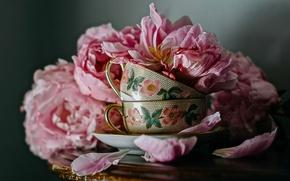 Картинка цветы, стиль, лепестки, чашки, кружки, пионы