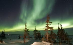 Картинка зима, деревья, ночь, аврора, Северное сияние