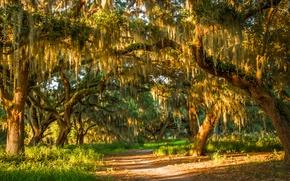 Картинка лес, лето, трава, солнце, деревья, тропинка