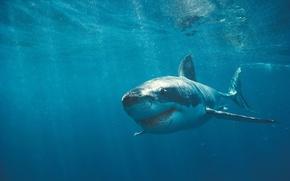 Обои Акула, Зубы, Шрамы