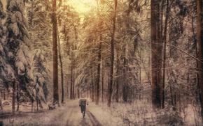 Картинка лес, снег, обработка, спортсмен, пробежка, Winter running