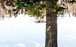 Картинка зима, лес, снег, дерево, ель