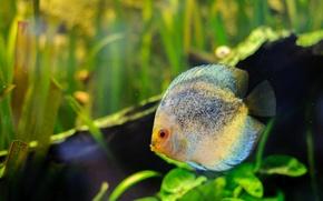 Картинка зелень, трава, глаза, вода, фон, цвет, аквариум, рыба, рот, пятна, хвост, плавники