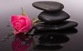 Обои камешки, цветы, розовые розы, бутоны