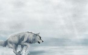 Картинка дождь, усталость, волк, бежит, art, Мара-Elle
