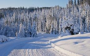 Картинка зима, дорога, снег, деревья, следы, ели