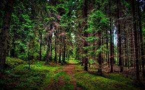 Картинка лес, деревья, природа, фото, тропа