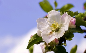 Картинка дерево, ветка, яблоня