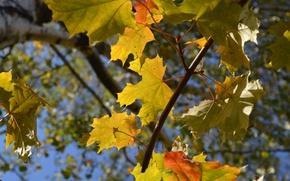 Картинка осень, листья, синий фон