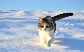 Картинка winter, snow, Cat, kitty cat