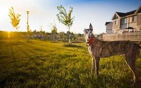 Картинка свет, дом, собака