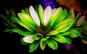 Обои краски, фон, лепестки, цветок