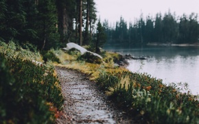 Картинка лес, река, дорожка