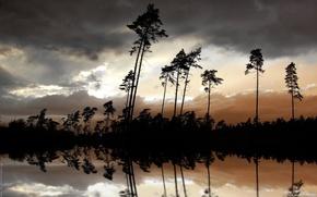 Обои деревья, ночь, река