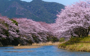 Обои река, гора, весна, Япония, сад, сакура, цветение