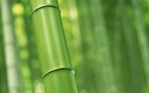 Картинка бамбук, nature, ствол макро