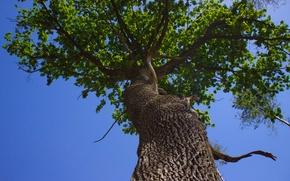 Картинка небо, дерево, листва, ствол
