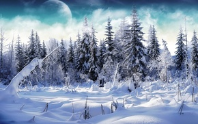 Обои Елки, снег, зима