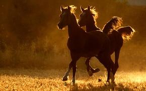Картинка Лошади, две, бег