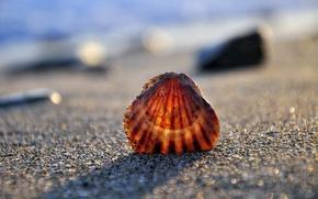Картинка песок, море, берег, ракушка
