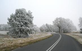 Обои дорога, деревья, снег