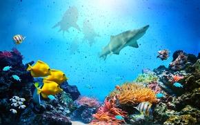 Картинка marine, coral, life reef
