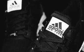 Картинка шнурки, Adidas, New York, EQT