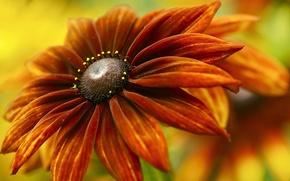 Картинка цветок, фон, красно-оранжевый