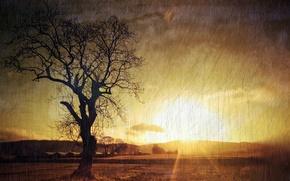 Картинка природа, стиль, фон, дерево