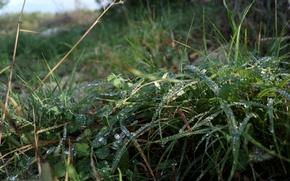 Картинка green, grass, rain, nature, water, beautiful, macro, morning, drops, scene, dew, Croatia, relaxing, Brac, Nokia ...