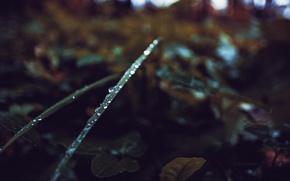 Картинка осень, трава, капли, зеленый, Россия, dobraatebe