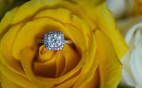 Картинка роза, кольцо, желтая, обручальное