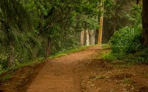 Картинка дорога, лес, лето, тропа
